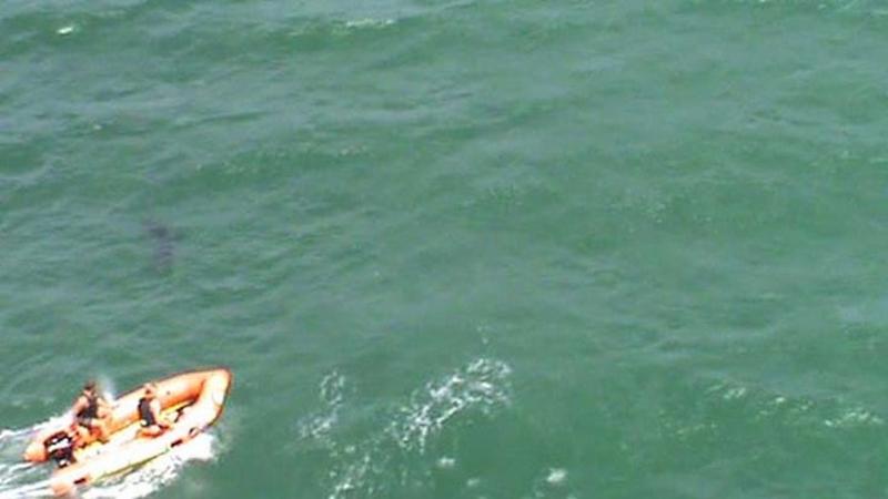 New Zealand Shark Attack