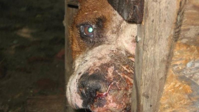 Stop Animal Abuse Malaysia