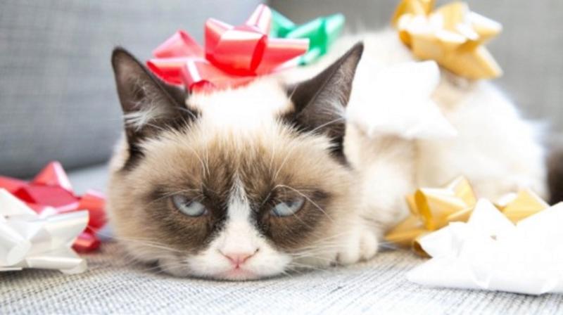 Grumpy Cat Movie Deal