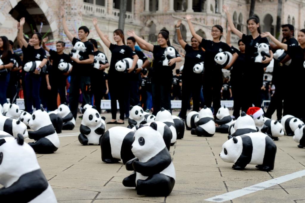 Pandas at Dataran Merdeka