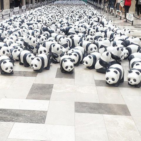 1600 Pandas Publika