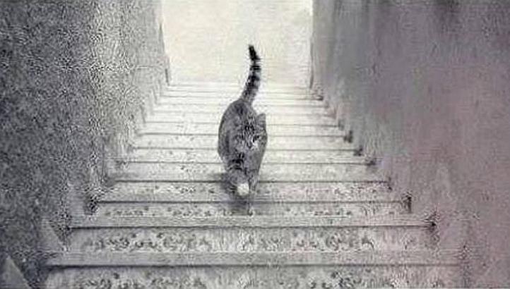 Cat Stairs
