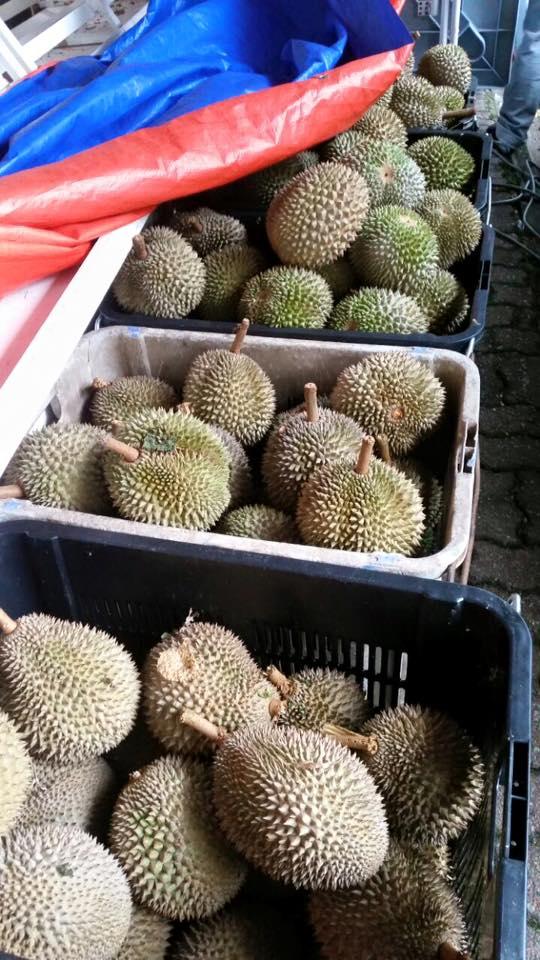 Black Thorn Durian King TTDI