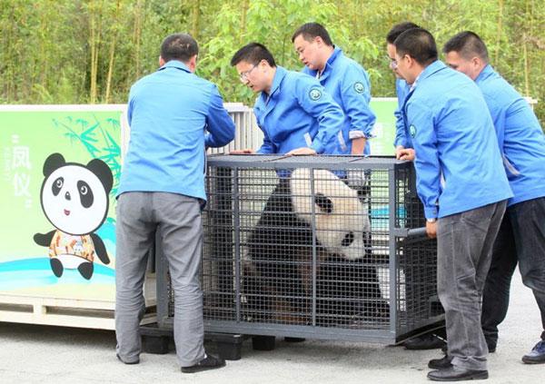 #ZooNegara: Malaysia's Giant Panda, Liang Liang, Gives Birth
