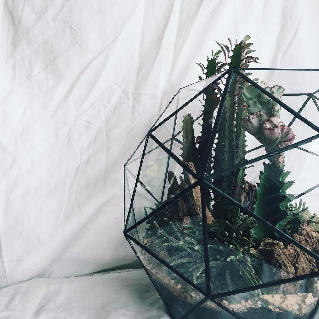 A&E Bangsar Terrarium