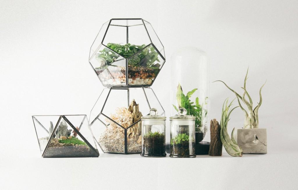 Little Habitats Terrarium