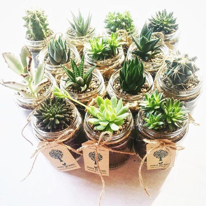 Mini Green Terrariums