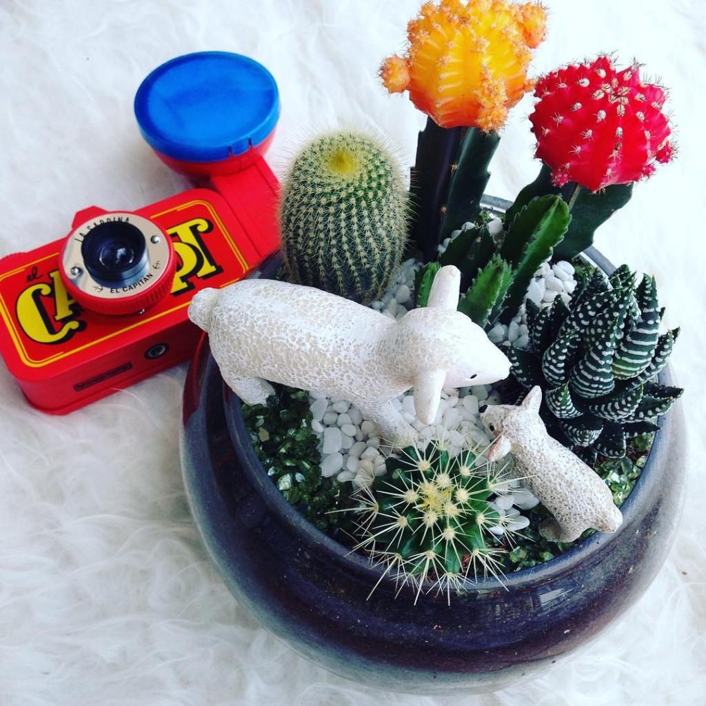 Ola Cacti Terrarium