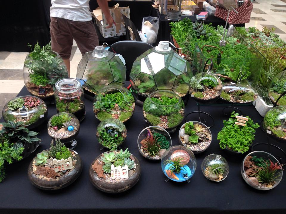 Terrarium 14 Best Places To Find Quot Little Gardens Quot In