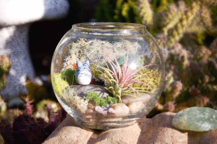 Terrarium: 14 Best Places To Find