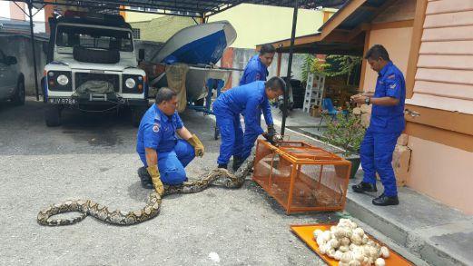ular1.transformed