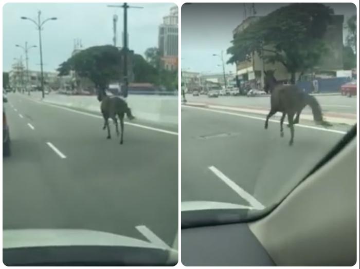 Kota Bharu Runaway Horse