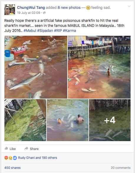 Sabah Mabul Island Shark Finning