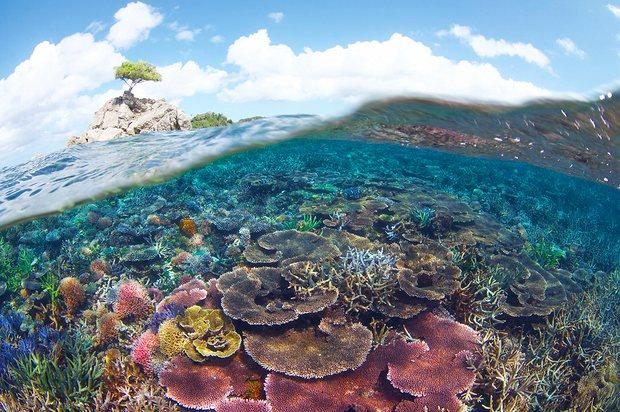 marine park Eric Madeja:WWF Malaysia