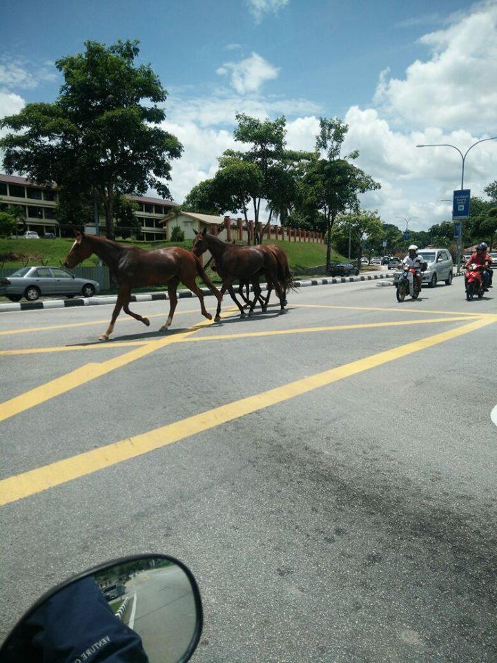 4 horses in ipoh