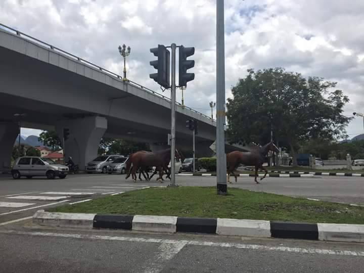 4 horses ipoh