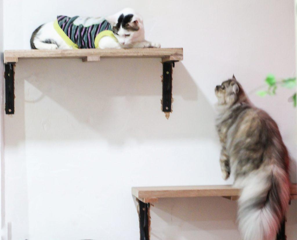 Kitten Cottage